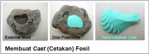 fosilisasi3.png